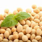 Tăng khả năng thụ thai nhờ mầm đậu nành ?