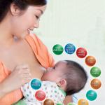 Tìm hiểu quá trình sản xuất sữa mẹ